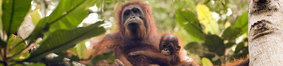 Orangutan Tropical Peatland Project
