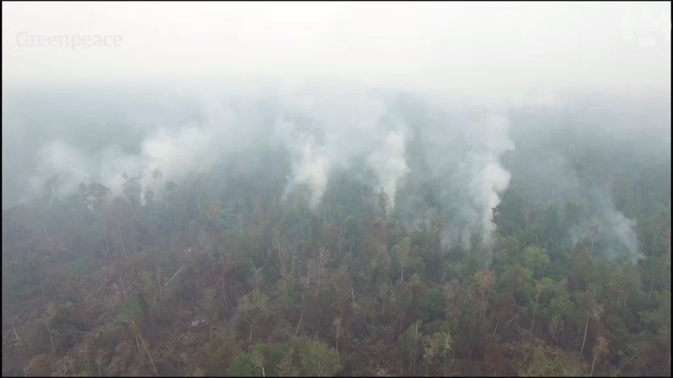 Shocking drone footage captured by Greenpeace field researchers shows extensive peat and forest fires burning in Indonesia in early October.