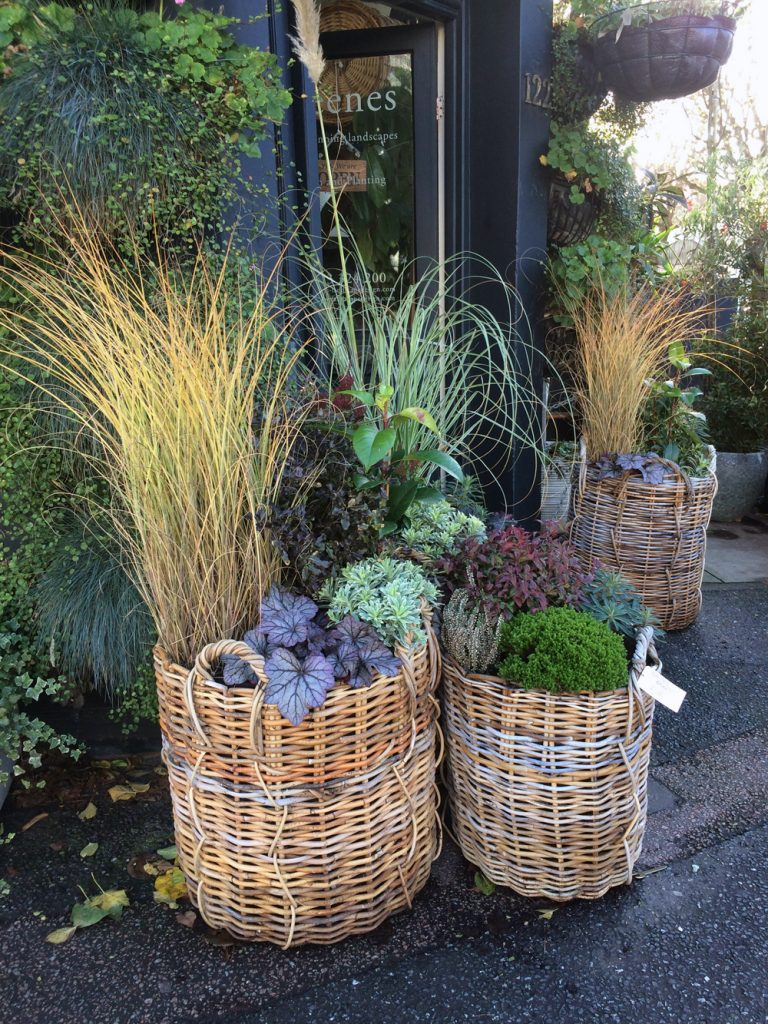 Baskest outside Greenes Landscape Design , Hove, Sussex
