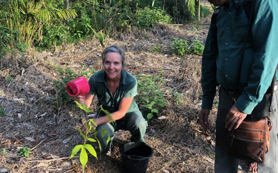 Planting a tree before leaving the Hutan Harapan Base Camp , Jambi Province , South Sumatra , April 2019